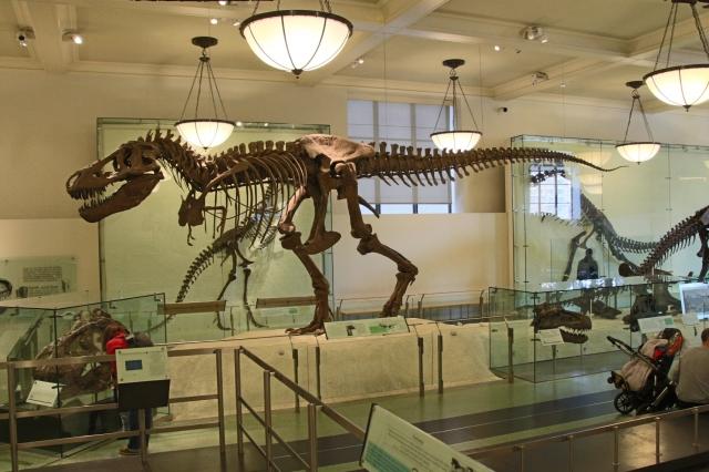 AMNH T. rex